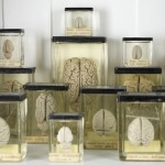 Brains in jars © UCL, GMZ and Matt Clayton