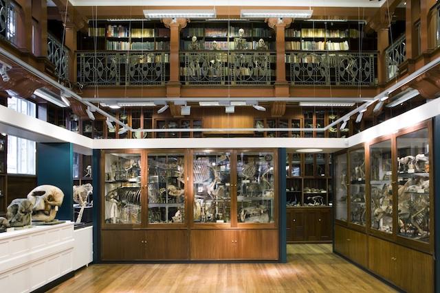 Grant Museum Interior © Grant Museum/ Matt Clayton