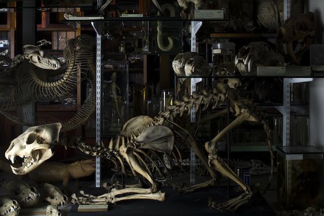 Skeletons © UCL, GMZ and Matt Clayton
