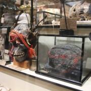 Pitt Rivers Feather Skull Shelf